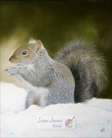 Squirrel in Snow. Pastel painting. Ivan Jones artwork