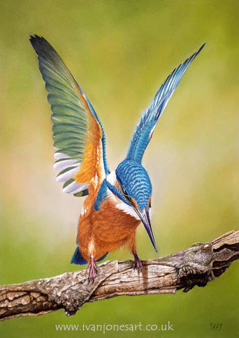"The completed kingfisher ""The next catch"""