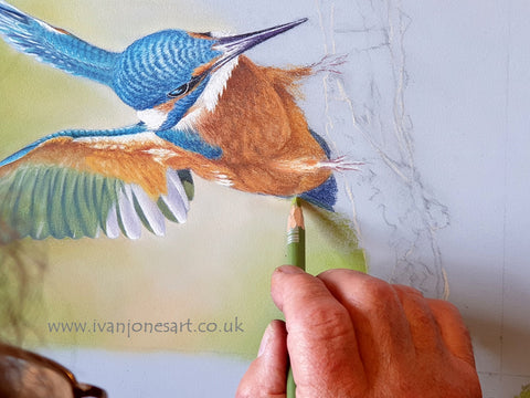 Using pastel pencils on kingfisher background