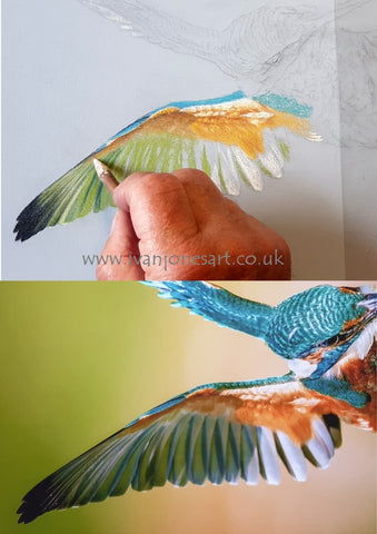 Kingfisher comparing art with reference photo