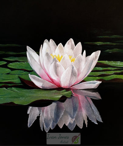Waterlily reflections. Pastel painting. Award winner. Ivan Jones Artist