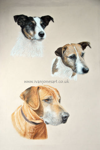 Three dogs pet portraits commission Ivan Jones pastel artist