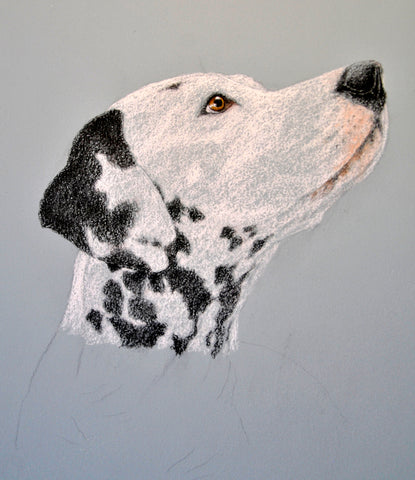 Rough sketch of Strider from reference photo pet portrait commission Ivan Jones pastel artist