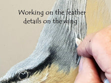 Lade das Bild in den Galerie-Viewer, Nuthatch perching artwork in progress - Ivan Jones Pastel Artist