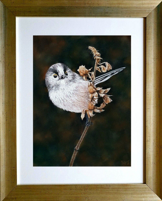 Longtailed Tit on seed head in frame. Pastel painting. Ivan Jones artist