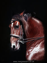 Load image into Gallery viewer, Champing at the bit horse portrait Ivan Jones pastel artist