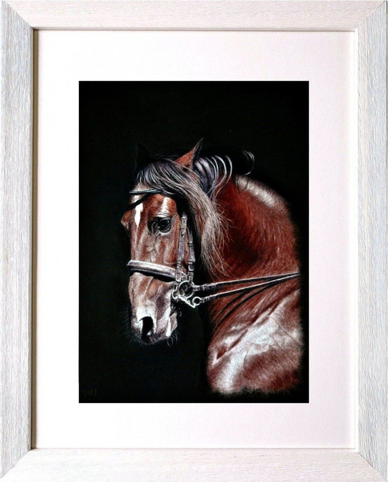 Champing at the bit framed horse portrait Ivan Jones pastel artist