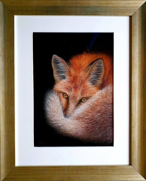Keeping a eye out - an alert fox in frame - Ivan Jones Pastel Artist