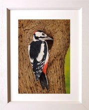Charger l'image dans la galerie, High-rise accommodation - great spotted woodpecker in frame Ivan Jones Pastel Artist