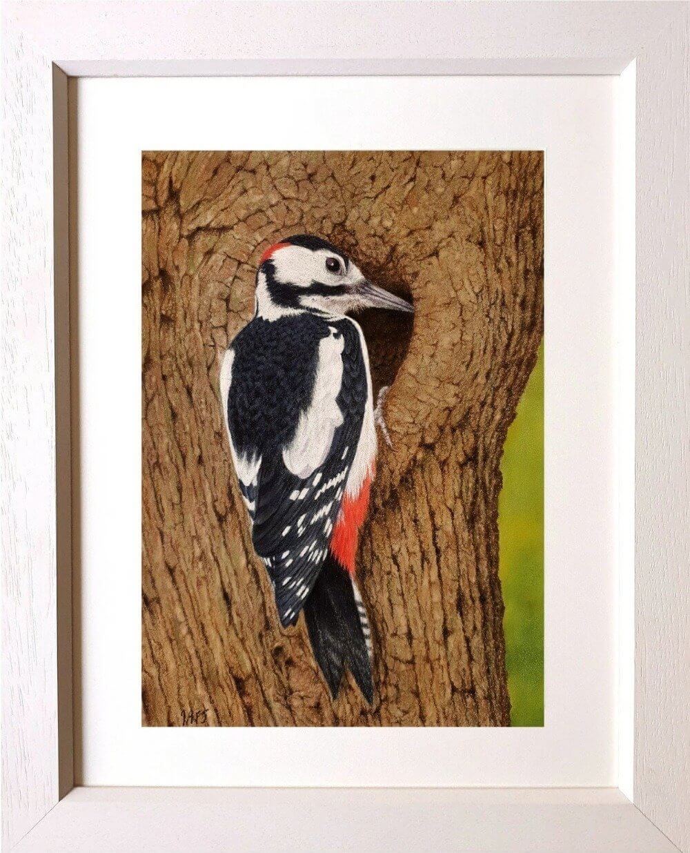 High-rise accommodation - great spotted woodpecker in frame Ivan Jones Pastel Artist