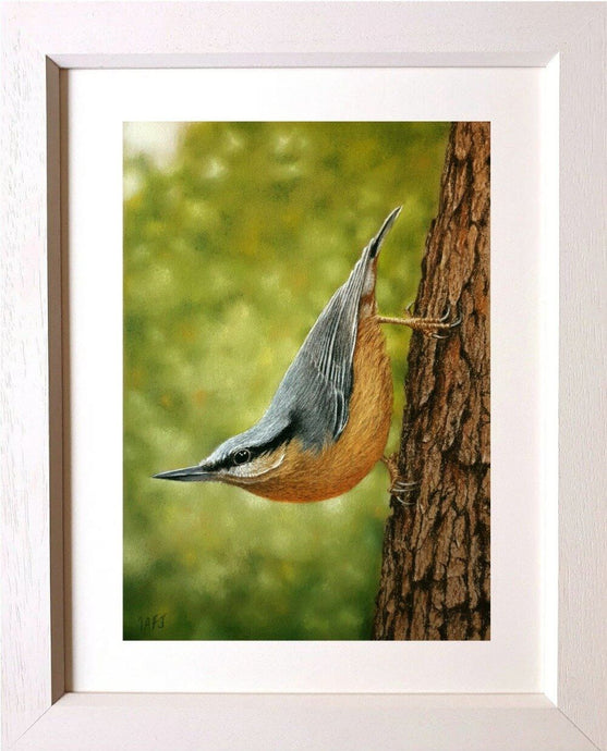 Nuthatch. Pastel painting framed. Ivan Jones artist