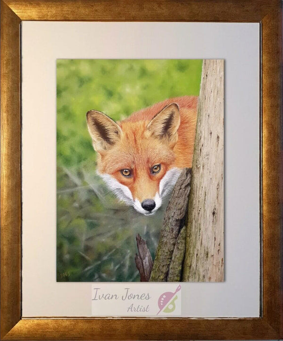 Foxy Lady. Vixen pastel art framed. Ivan Jones pastel artist