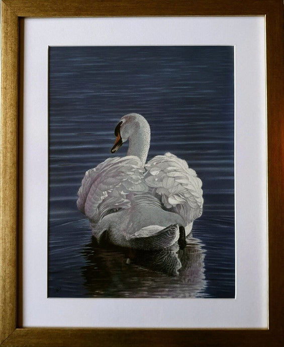 Regal reflections swan Framed Ivan Jones pastel artist