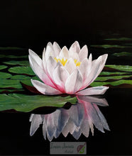 Lade das Bild in den Galerie-Viewer, Waterlily reflections. Ivan Jones Pastel Artist