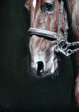 Load image into Gallery viewer, Champing at the bit Horse portrait Detail on nose and bridle. Ivan Jones Pastel Artist