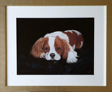 Load image into Gallery viewer, Ready to go - Cavalier King Charles Spaniel - Ivan Jones Pastel Artist