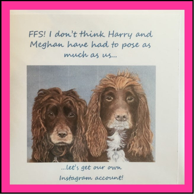Greeting Card Spaniels -