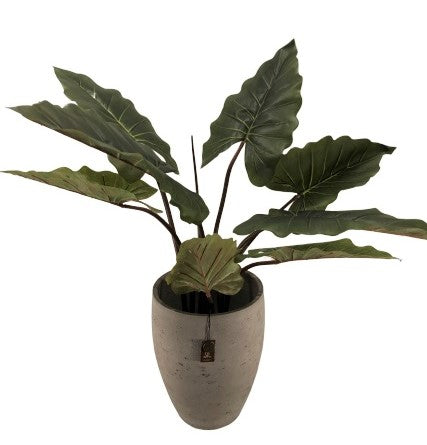 Adelaide Cement Light  Pot High A  Olive 36x44