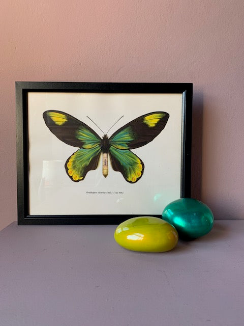 Framed Green Butterfly Vintage Print