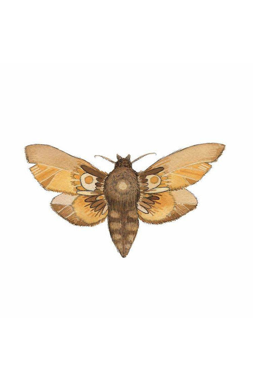 Polanshek of the Hills - Moth 6 Print - Collector