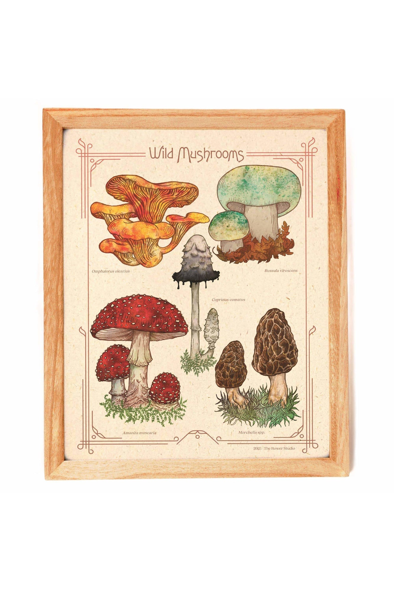 The Bower Studio - Wild Mushrooms Print
