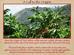 Mother Earth Restoration Coffee Beans - Na'vi Organics Ltd