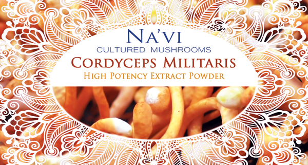 Full Spectrum Cordyceps Militaris Fruiting Body Extract Powder - Superior Quality - Na'vi Organics Ltd