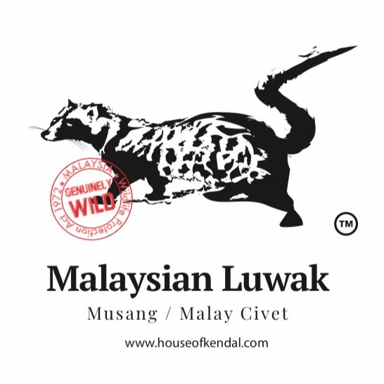 Malaysian AUTHENTIC Wild Luwak Liberica - In Malaysia CIVETS are protected ELIGIBLE FREE SHIPPING
