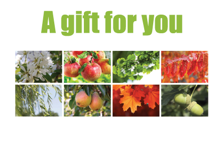 Gift card the hub hospice tree campaign negle Image collections