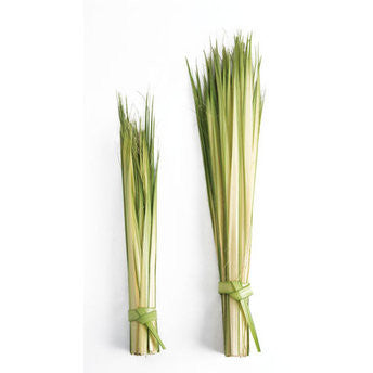 Short Double Palm Strips