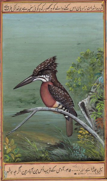 Giant Kingfisher Bird Painting Handmade Ornithology Nature Indian Miniature Art