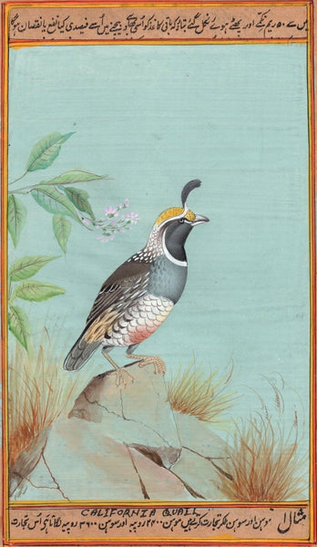 California Quail Bird Painting Rare Handmade Indian Miniature Nature Decor Art