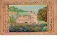 Indian Miniature Style Puma Cougar Painting Rare Handmade Wild Mountain Lion Art