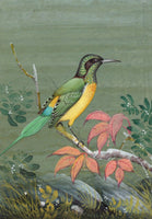 Indian Miniature Painting Handmade Green Tailed Sunbird Watercolor Wild Life Art