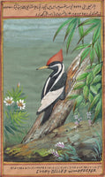 Ivory Billed Woodpecker Bird Painting Indian Miniature Nature Handmade Decor Art