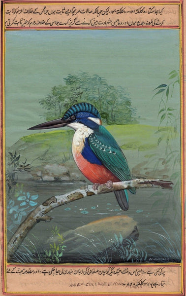 Kingfisher Bird Art
