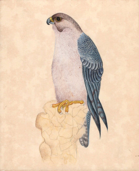 Indian Hawk Miniature Painting Handmade Bird of Prey Watercolor Nature Artwork