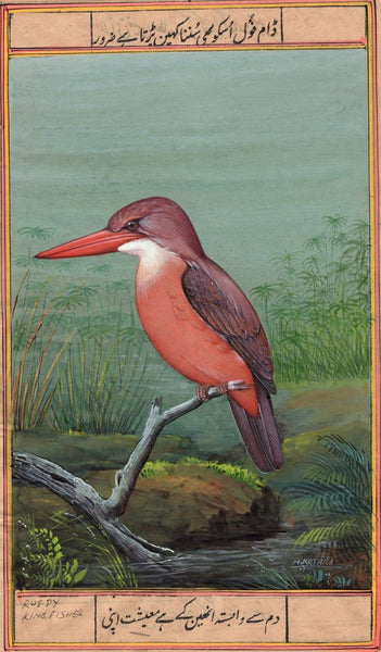 Ruddy Kingfisher Art