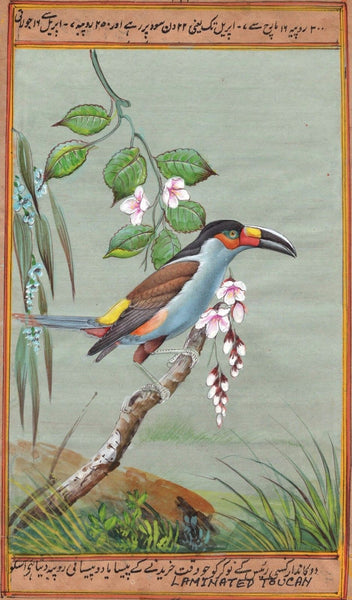 Indian Miniature Painting Rare Handmade South American Laminated Toucan Bird Art