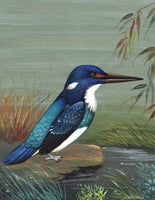 Blue Banded Kingfisher