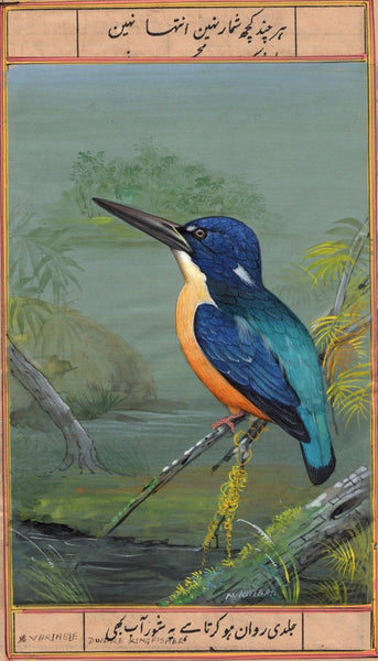Variable Dwarf Kingfisher Wild Life Painting