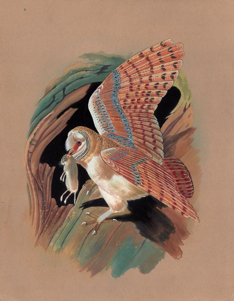 Barn Owl Bird Painting Handmade Watercolor Indian Ornithology Nature Art 9″X12″