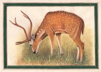 Animal Nature Painting