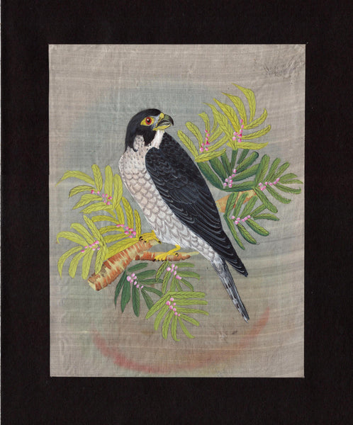 Falcon Painting