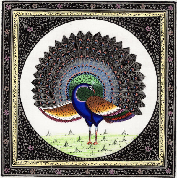 Peacock Bird Painting