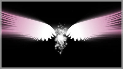 Angel Wings Pink Transition