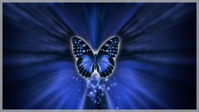 Blue Butterfly Transition