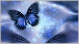 Butterfly Blue Background