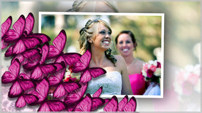 Pink Butterflies Transition
