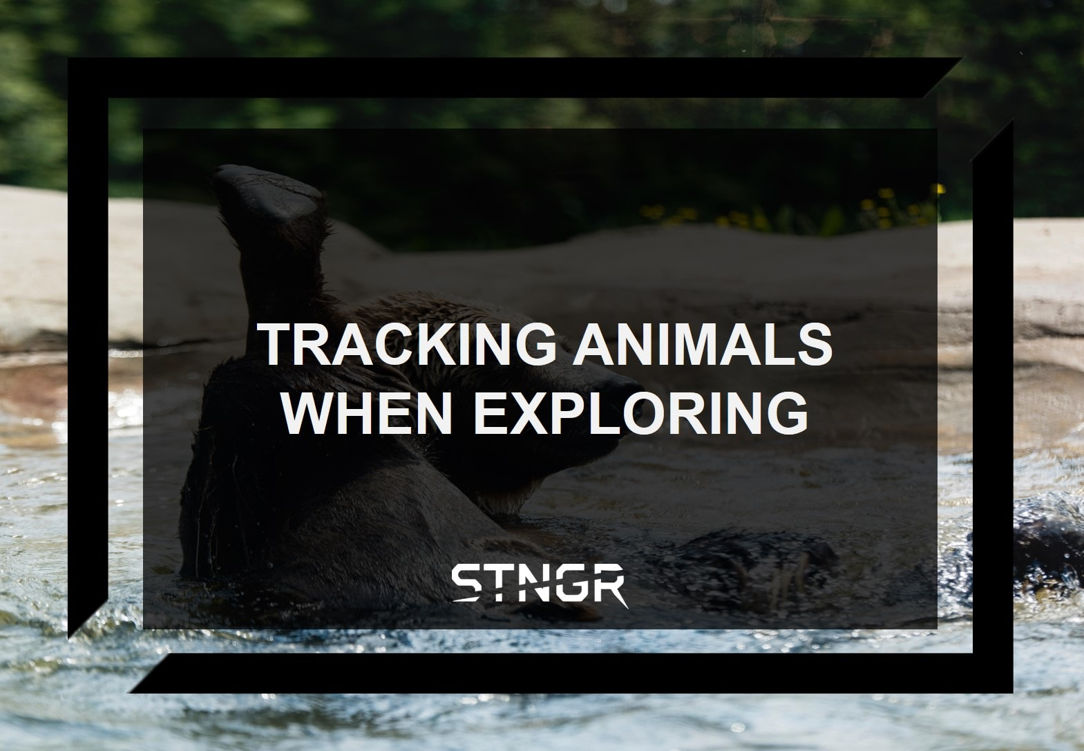 Tracking Animals When Exploring